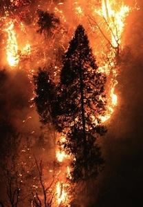 ヨセミテの山火事
