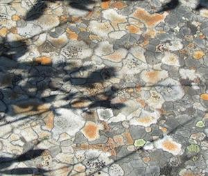 苔が生えてカラフルな岩
