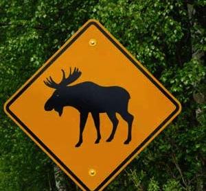 ムース注意の標識
