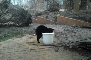 焼け出された家で見ずを飲む猫