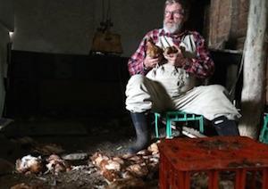 生き残った鶏を抱くマーシュさん by SMH