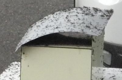 女王蟻が見えますか