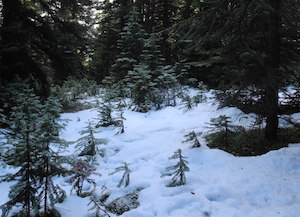 ボーサミットの積雪
